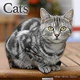 Cat Calendar - Cute Animals Wall Calendar - Calendars 2019 - 2020 Wall Calendars - Cats 16 Month Wall Calendar by Avonside (Multilingual Edition)
