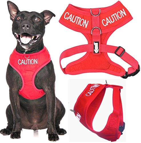 caution dog harness - 1