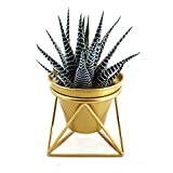 Plant Urns Planter Pot Indoor Geometric Metal Stand Balcony Tabletop Succulent Pot Bonsai Decorative Home Garden Kitchen Modern Plant Holder for Cactus Flower Plant (S)