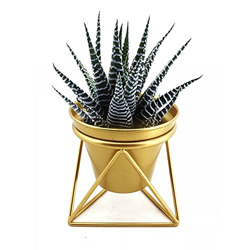 Plant Urns Planter Pot Indoor Geometric Metal Stand Balcony Tabletop Succulent Pot Bonsai Decorative Home Garden Kitchen Modern Plant Holder for Cactus Flower Plant (S) by Awesomes