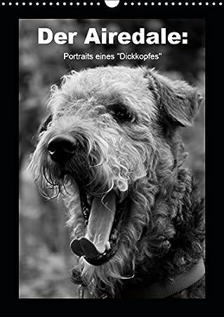 Der Airedale: Portraits eines Dickkopfes (Wandkalender 2019 DIN A3 hoch): Der liebenswerte Airedale hat viele Facetten:äußerlich und ... (Monatskalender, 14 Seiten ) (CALVENDO Tiere) Gaby Rottmann 3669722629 Terrier Airedale Terrier