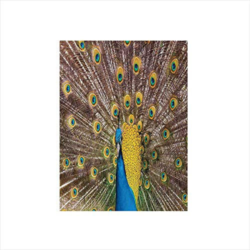 (Ylljy00 Decorative Privacy Window Film/Peacock Displaying Feathers Golden Vibrant Colors Eye Shaped Patterns Picture/No-Glue Self Static Cling for Home Bedroom Bathroom Kitchen Office Decor)
