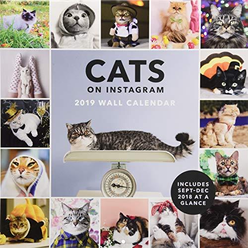 Cats on Instagram 2019 Wall Calendar