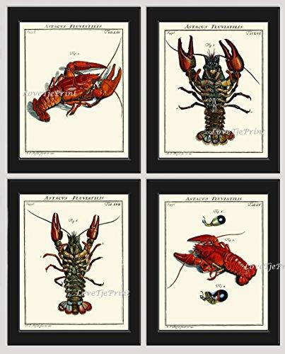 lobster-wall-art-print-set-of-4-prints-antique-beautiful-red-blue-lobsters-natural-science-sea-ocean
