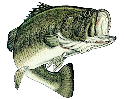 Bass Fish Sticker Decal Fishing Bumper Sticker Fish Auto Decal Car Truck Boat RV Real Life Rod Tackle Box