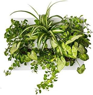 Ortisgreen Hang Oasi Home Indoor Vertical wall planter
