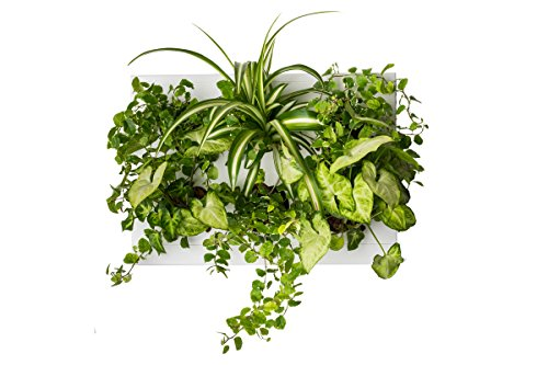 Manufactured by Ortisgreen Hang.Oasi.Home - Indoor Vertical Garden, Contains 1 White Planter Unit, Design Your Own Living Wall With Vertical Gardening Planters, Use Indoors, Holds 6 Plants (Garden Tropical Indoor)