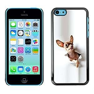 TopCaseStore / la caja del caucho duro de la cubierta de protección de la piel - Chihuahua Small Pet Canine Fashion White - Apple iPhone 5C