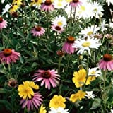 Outsidepride Partial Shade Wildflower Seed Mix - 5 LB