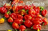 (25+) Red Savina Habanero Pepper Seeds Hot