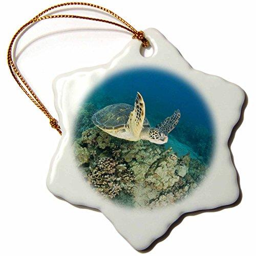 3dRose Green Sea Turtle, Makena SP, Maui, Hawaii US12 SWS0149 Stuart Westmorland Snowflake Ornament, 3'' by 3dRose