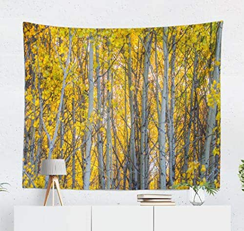Deronge Tapestry, Birch Trees Colorful Leaves Colourful Autumn Branches Calm Tapestry Wall Hanging Decor 50x60 Inch Wall Art Tapestry for Men Bedroom Decorative Tapestry Dorm Decor,Birch Trees