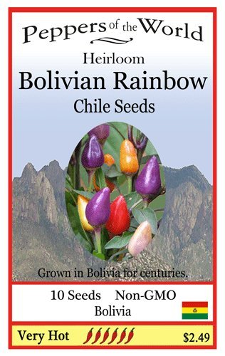 Bolivian Rainbow Heirloom - 10 Seeds - Ornamental Hot Pepper - Beautiful Plant
