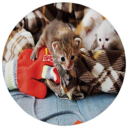 - YOWAKi Round Rug Mat Carpet,Cats,Kittens and Mittens Newborns Baby Animals in an Plain Blanket Wood Play Toys Adorable,Multicolor,Flannel Microfiber Non-Slip Soft Absorbent,for Kitchen Floor Bathroom
