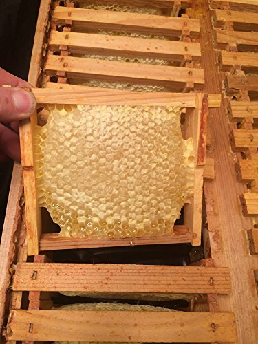 Eco Bee Box full medium pine comb super/box. Holds 26 foundationless frames. Comes assembled by Eco Bee Box Utah Hive Full (Image #4)