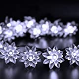 HIOTECH Solar String Lights Lotus Shape 20 LED Lights for Outdoor, Patio, Lawn, Landscape, Fairy Garden, Home, Wedding, Christmas (White) Review