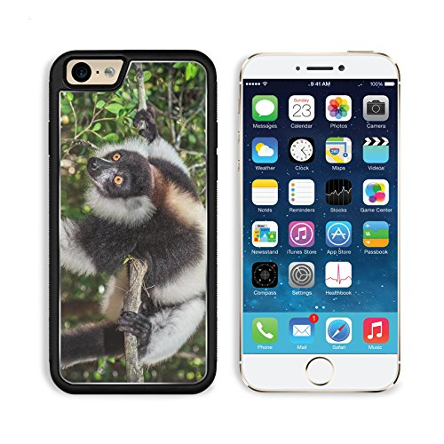 (Luxlady Apple iPhone 6 iPhone 6S Aluminum Backplate Bumper Snap iphone6/6s Case IMAGE ID: 35648851 Black and white ruffed lemur of Madagascar)