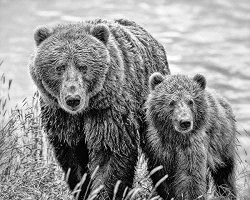 Amazon.com: Grizzly Bear and Cub Wildlife Photography