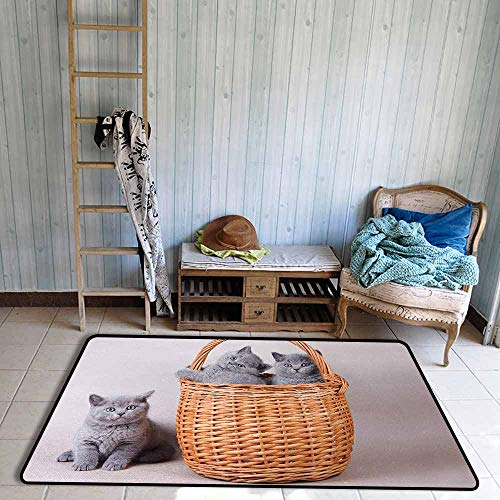 Inner Door Rug Kitten Three British Cats Kitties in Basket Adorable Baby Animals Fluffy Pets Anti-Fading W59 xL82.5 Grey Pale Brown Dust