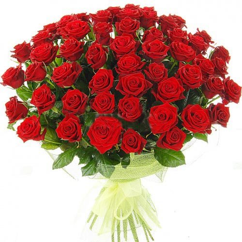- 50 Fresh Red Roses | 50 cm. long (20