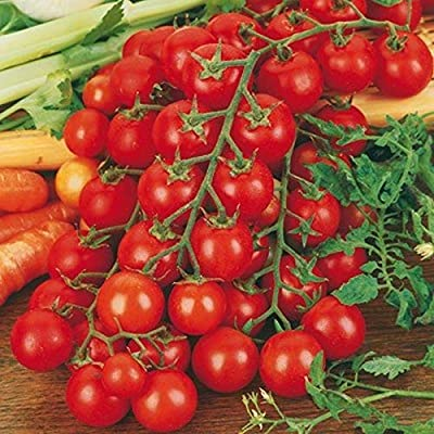 Ciliegino Tomato Seeds - A famous, sweet Sicilian cherry tomato!! Hundreds!!!!(10 - Seeds) : Garden & Outdoor