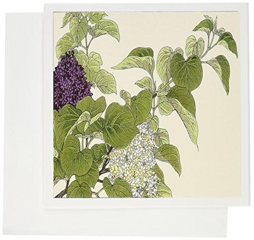 3dRose morado y blanco lila arbustos impresión de árbol japonés–Tarjetas de felicitación, 6x 6inches, juego de...