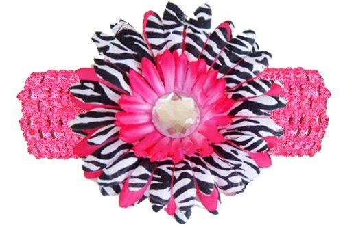 Amazon Hot Pink Black White Zebra Jewel Gerbera Daisy Flower