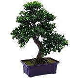 Árbol de Bonsai Europalms caja, verde/marrón