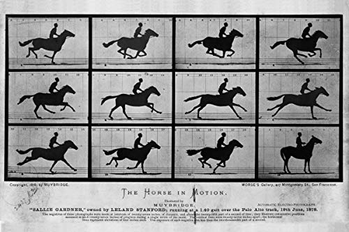 History Prints The Horse in Motion, Photographs by Eadweard Muybridge, 1876