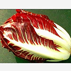 200 seeds/pack Red chicory, cabbage red chicory, nutritious vegetable seeds