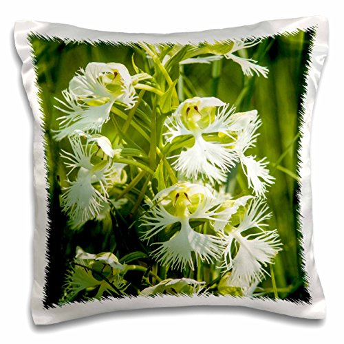 Custom Fringed Square Pillow - Danita Delimont - Flowers - Western Prairie Fringed Orchid flower, USA - US35 CHA0353 - Chuck Haney - 16x16 inch Pillow Case (pc_145639_1)