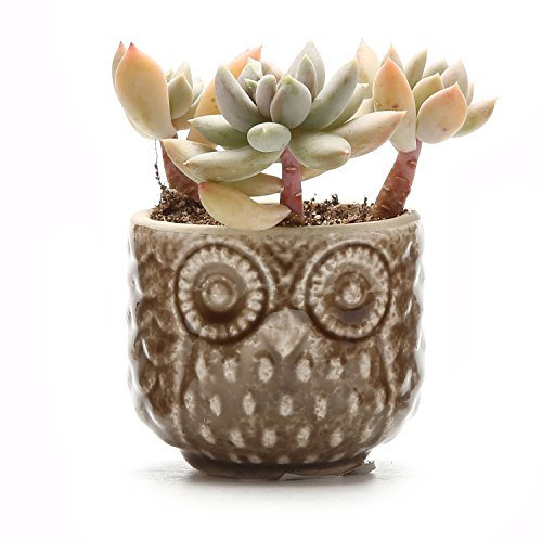T4U 2.75 Inch Ceramic Owl Pattern succulent Plant Pot/Cactus Plant Pot Flower Pot/Container/Planter Brown
