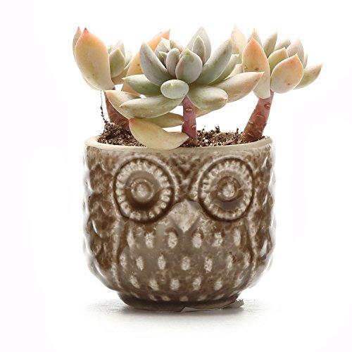 T4U 2.75 Inch Ceramic Owl Pattern succulent Plant Pot/Cactus Plant Pot Flower Pot/Container/Planter Brown