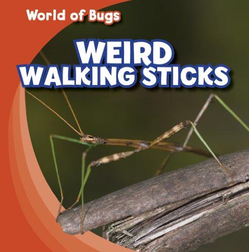 Weird Walking Sticks (World of Bugs)