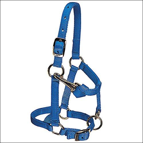 Weaver Leather Nylon Miniature Horse Adjustable Halter, Large, Blue
