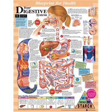 Your Digestive System Anatomical Chart - Laminated