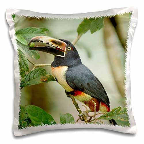 Danita Delimont - Tropical Birds - Collared Aracari, Tropical bird, Costa Rica - SA22 KRS0020 - Keith and Rebecca Snell - 16x16 inch Pillow Case (pc_87197_1) - Rebecca Canopy Bed