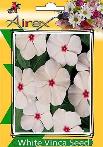 White Vinca Flower Seed 5 Packet Of White Vinca Pack Of Avg 100
