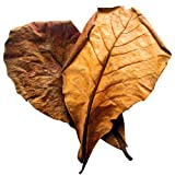 Natural Betta Leaves by SunGrow - Induce breeding & boost immunity of fish -- Improve comfort by simulating natural aquatic environment -- Organic, No chemicals added - Simulate Aquatic Environment