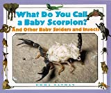 img - for What Do You Call a Baby - Scorpion? And Other Baby Spiders and Insects book / textbook / text book