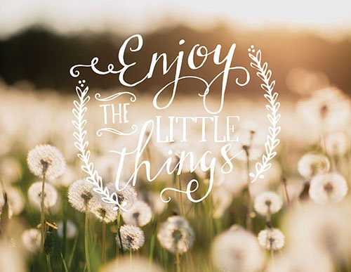 Jada Venia Light Box Insert - Enjoy the Little Things - Dandelions - Light Box Sold Separately