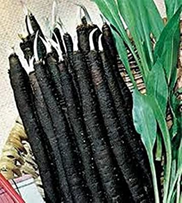Rare Seeds Scorzonera Black Salsify Organic Russian Heirloom Vegetable Seed