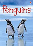 Penguins (Usborne Beginners) (Beginners Series)