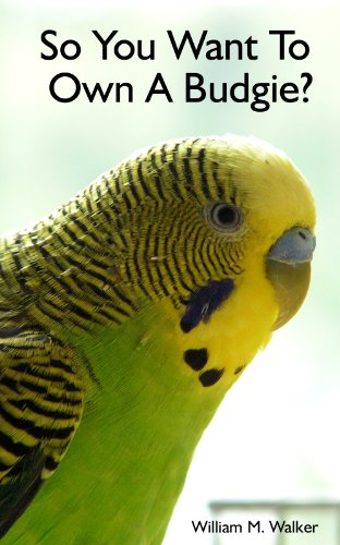 so-you-want-to-own-a-parakeet-or-budgie-parakeet-budgie-care