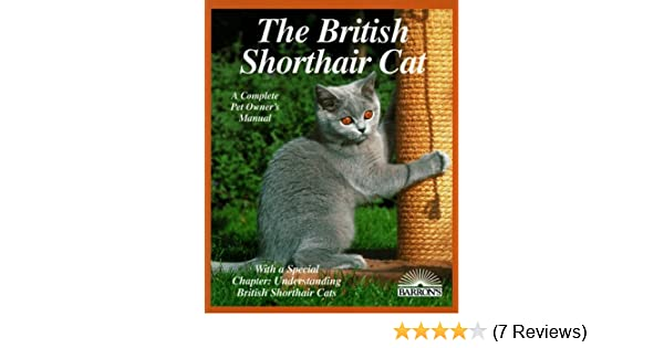 The British Shorthair Cat Everything About Acquisitions Care