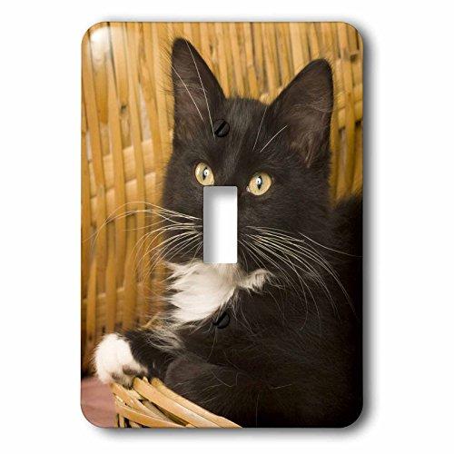 3dRose LSP 84111_ 1pelo corto gatito en cesta tapa, gatos NA02–mpr0102Maresa Pryor Interruptor de botón único