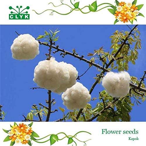 2017 novela planta ornamental Kapok semillas de árbol de algodón de seda roja, semillas de flores de interés 20 piezas/bolsa: Amazon.es: Jardín
