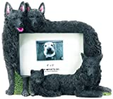Schipperke Gift Picture Frame Holds Your Favorite 4x6 Inch Photo, A Hand Painted Realistic Looking Schipperke Family Surrounding Your Photo. This Beautifully Crafted Frame is A Unique Accent to Any Home or Office. The Schipperke Picture Frame Is The Perfe