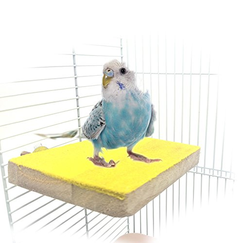 (Colorful Bird Perch Stand Platform Natural Wood Playground Paw Grinding Clean for Pet Parrot Budgies Parakeet Cockatiels Conure Lovebirds Hamster Gerbil Rat Mouse Cage Accessories Exercise Toys)