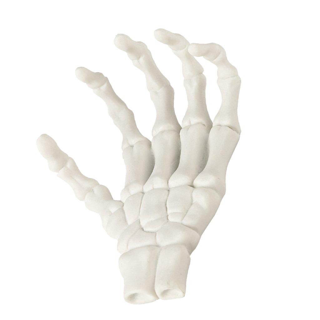Berühmt Bild Von Knochen In Der Hand Bilder - Anatomie Ideen ...